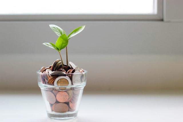 Roślinka wyrastające z pieniędzy